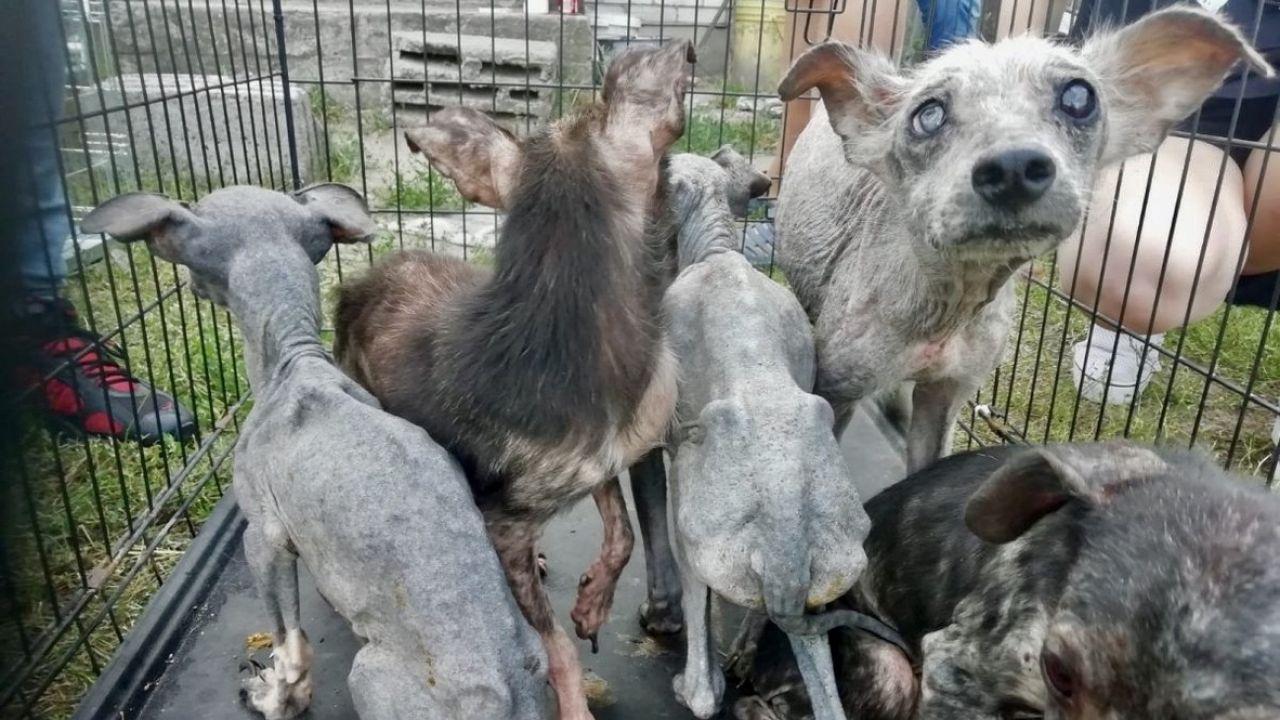 Zwierzęta trzymane były w klatkach (fot. Policja mazowiecka)