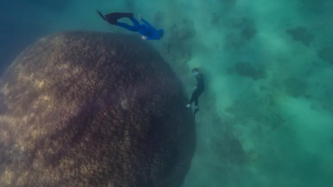 Koralowiec w pobliżu australijskiej Wyspy Orfeusza (fot. Richard Woodgett)
