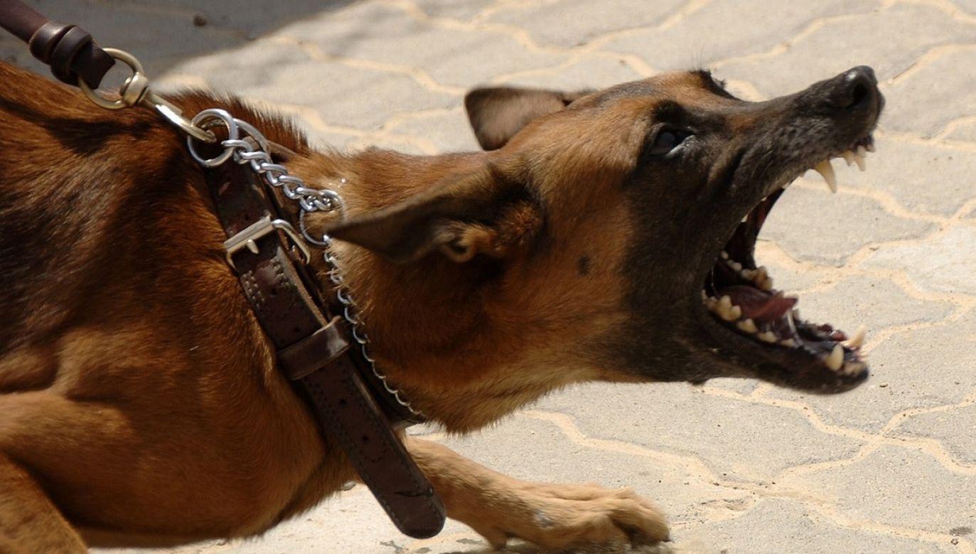 Właściciel nie chciał zakładać psu kagańca (fot. pixabay/272447)