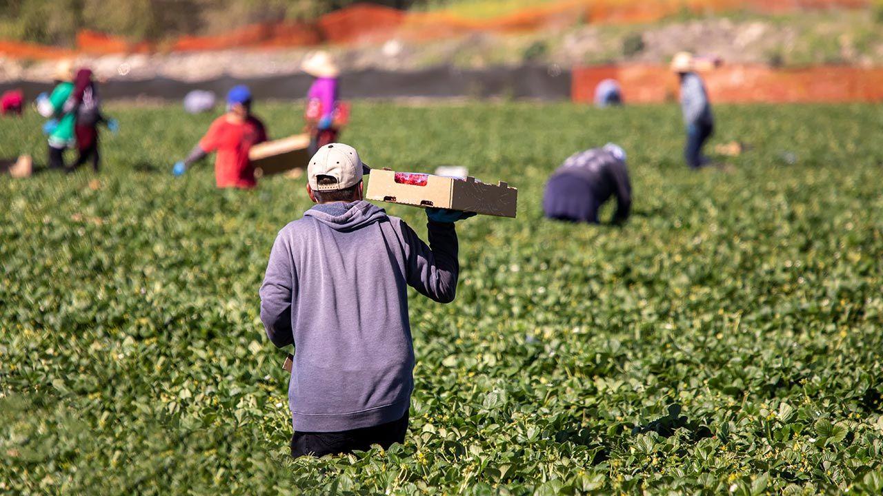 Miejsca pracy częściej są zajmowane przez Bułgarów i Węgrów (fot. Shutterstock/F Armstrong Photography, zdjęcie ilustracyjne)