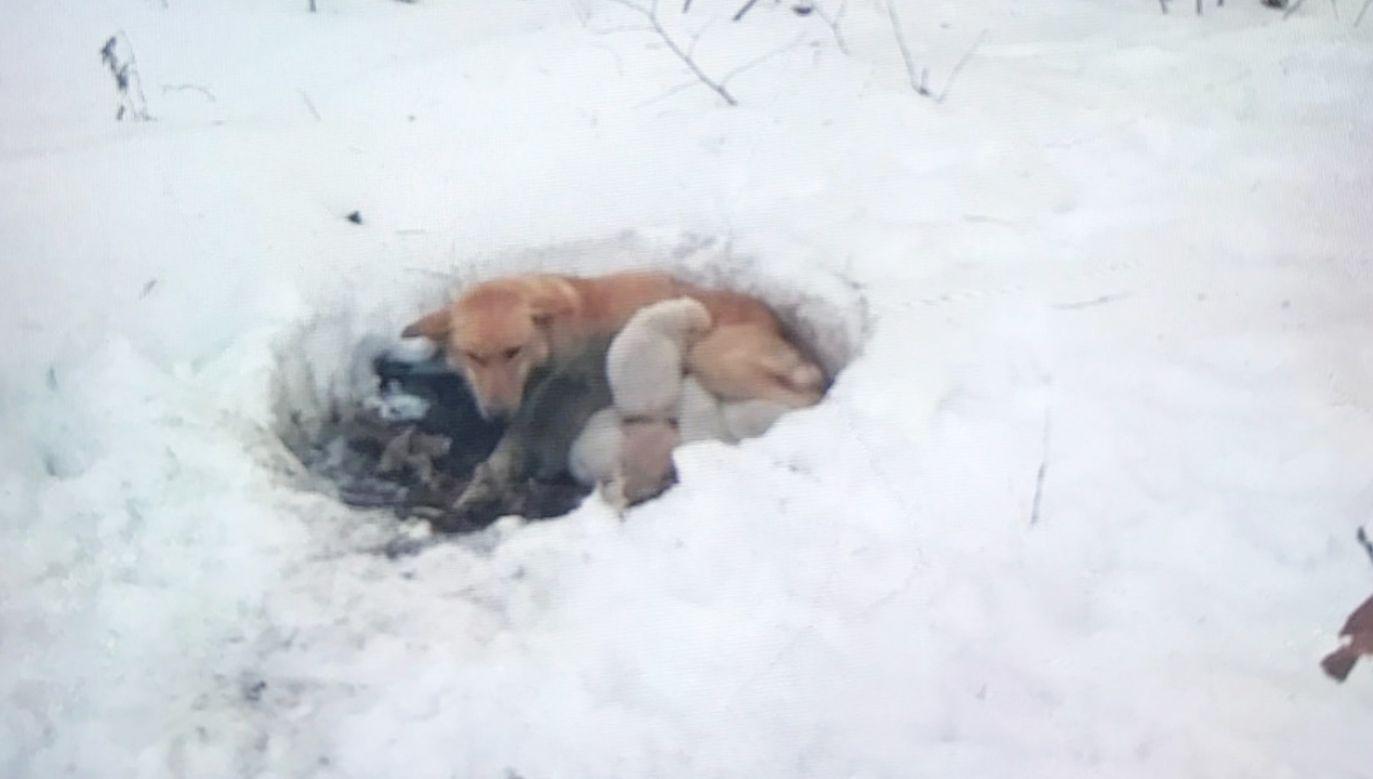 Szczenięta miały około trzech tygodni, kiedy zostały znalezione (fot. Facebook/Red Lake Rosie's Rescue)