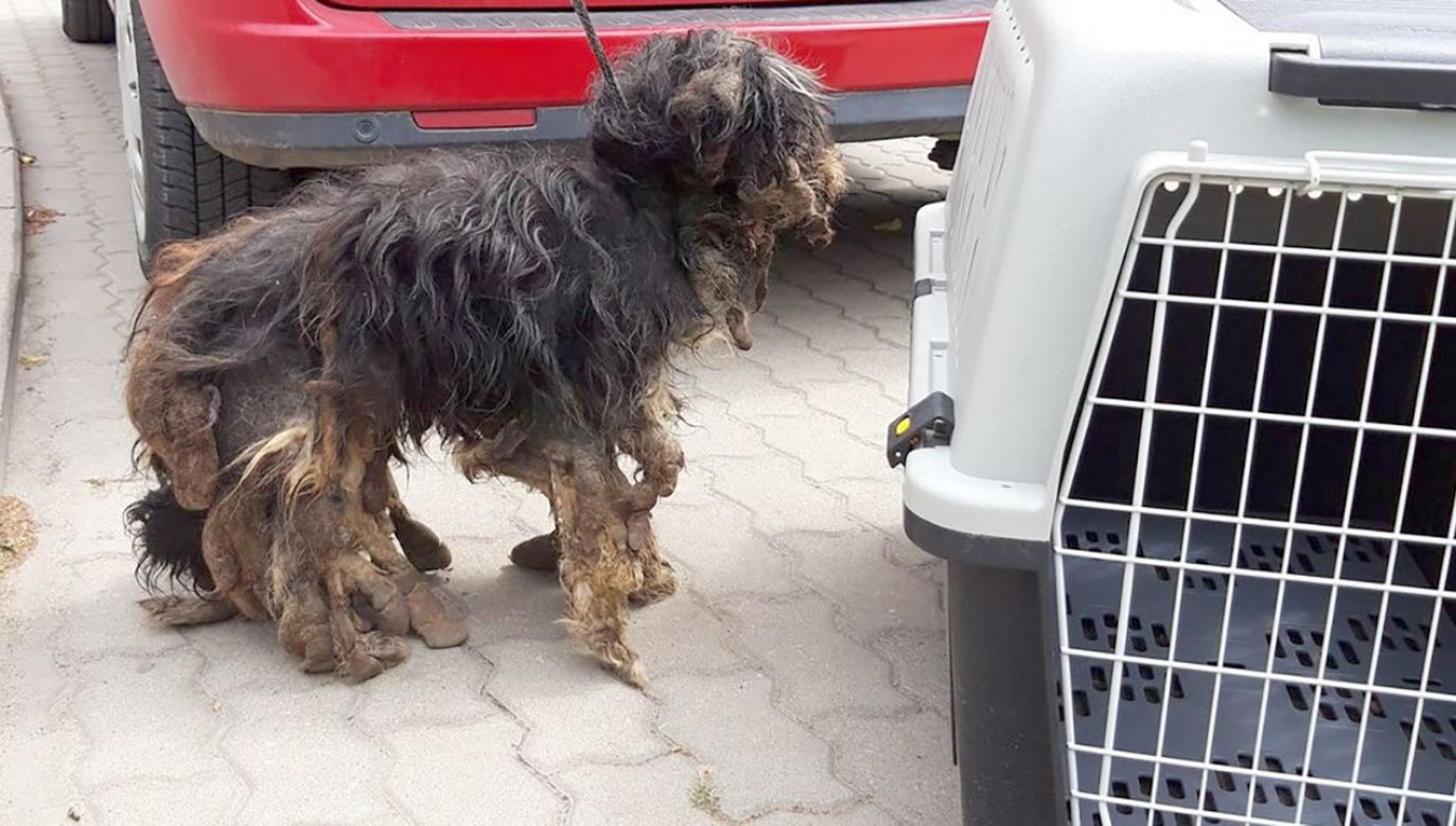 Pies został odebrany właścicielowi (fot. OTOZ Animals oddziału kujawsko-pomorskiego)