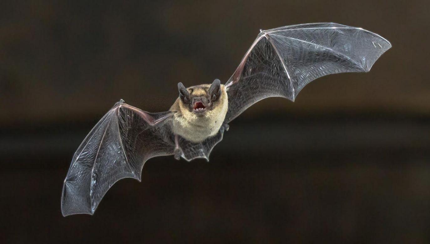 Badania pomóc w modelowaniu transmisji wirusów między zwierzętami (fot. Shutterstock/Rudmer Zwerver)