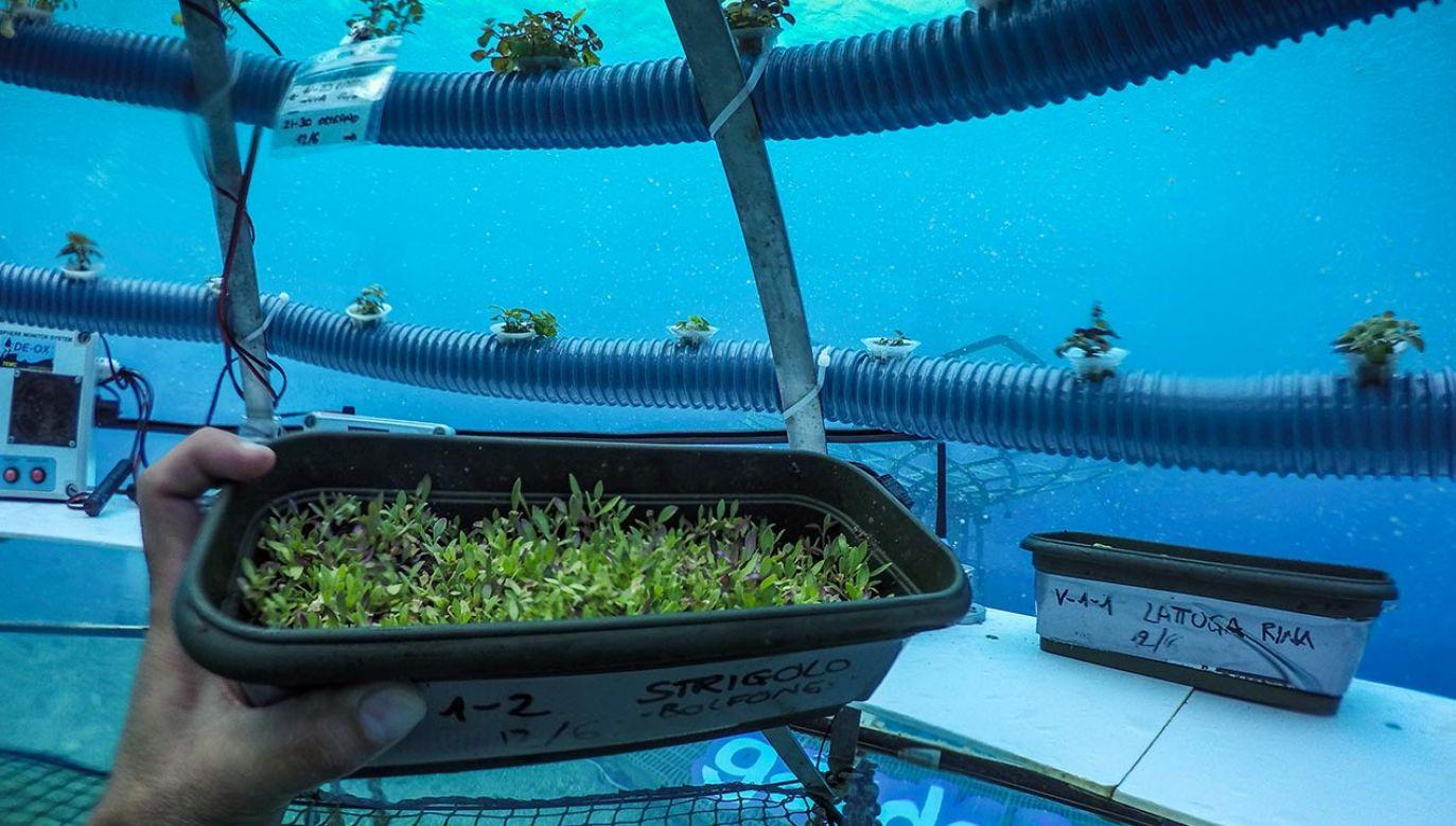 Futurystyczna hodowla ziół w podwodnych szklarniach (fot. Alexis Rosenfeld/Getty Images, zdjęcie ilustracyjne)